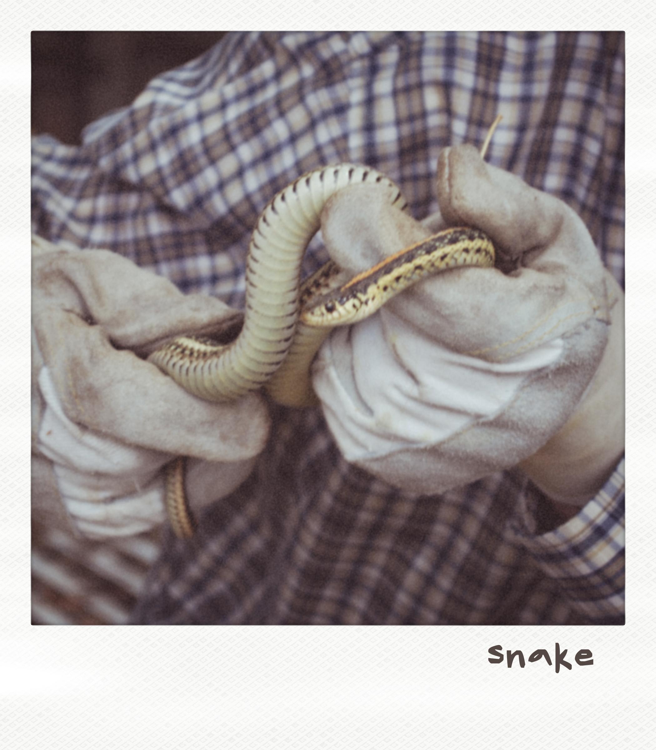 Snake number 1